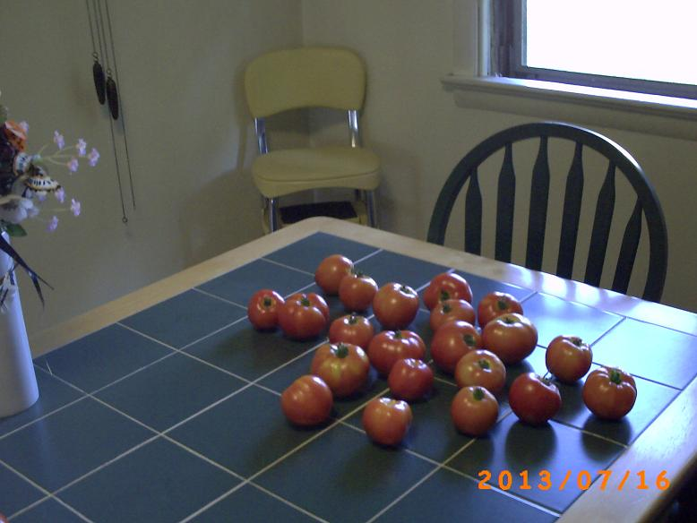 The tomato harvest for this week. Really going well right now.