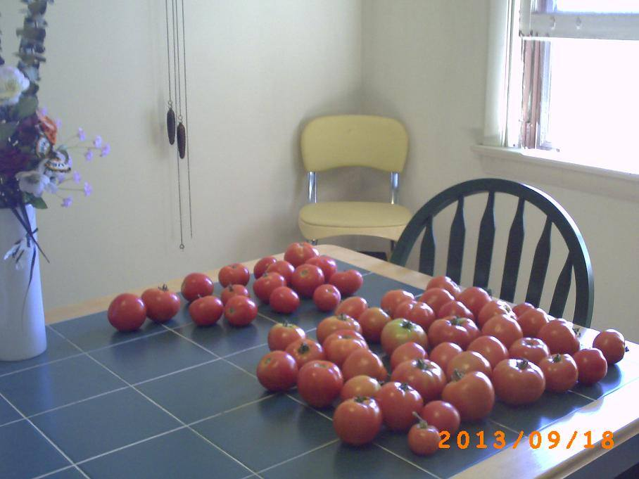 Tomato harvest fully recovered.