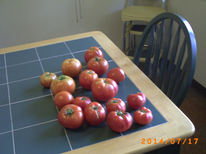 16 nice tomatoes on the kitchen table