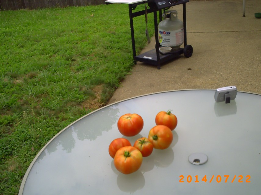 A few more tomatoes