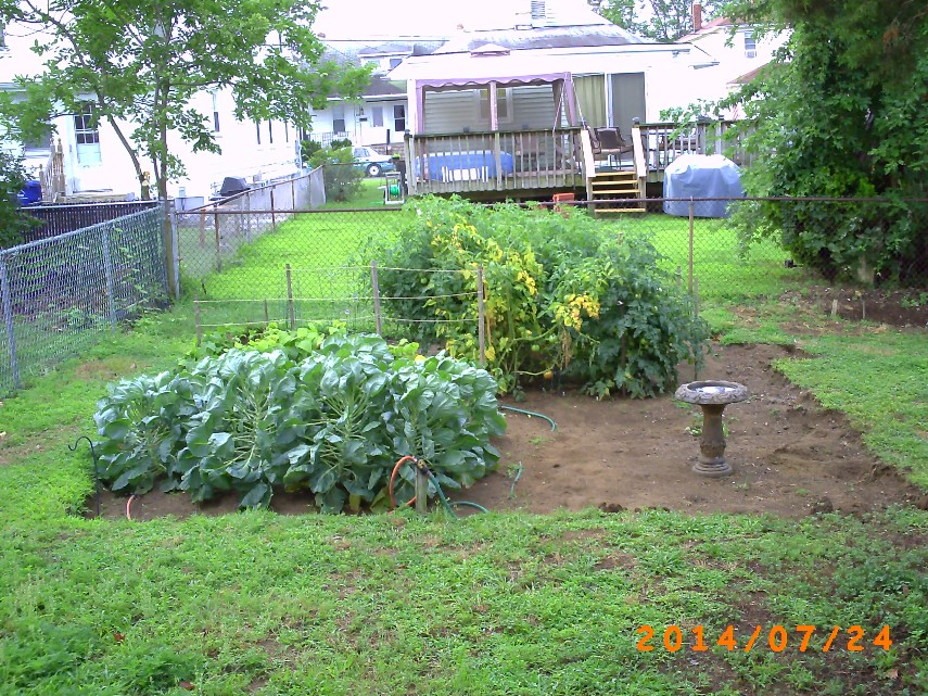 The garden from the Brussels Sprouts end and a little elevated