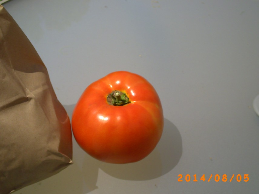 A picture of my most perfect tomato yet.