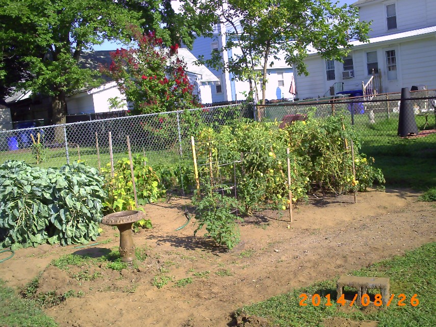 Overview of garden and speck damage.